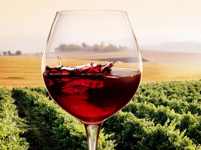 Det går att söka på veganska viner på Systemet.