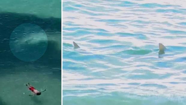 Här simmar hajen bara meter från badgästen