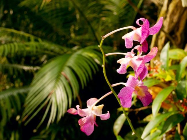Blir du också sugen på att skaffa en djungel i ditt boende är det mycket du bör tänka på innan du går loss. Är du exempelvis lat, glömsk eller reser mycket kan det också var bra att välja extra tåliga växter.