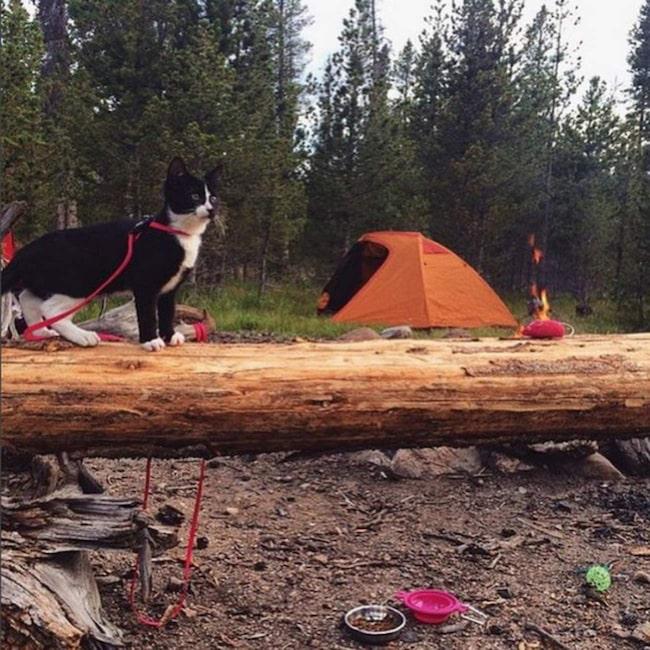 <span>Campinglivet får inte bara magen att kurra.<br></span>
