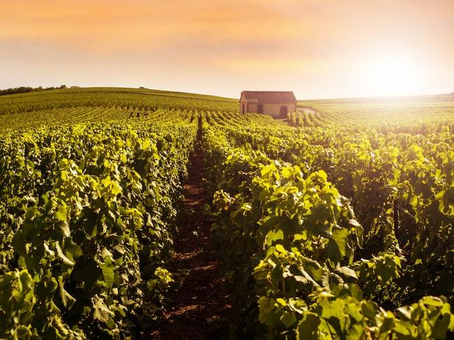 Champagne ses ofta som facit för mousserande vin, som bubblornas bubbel.