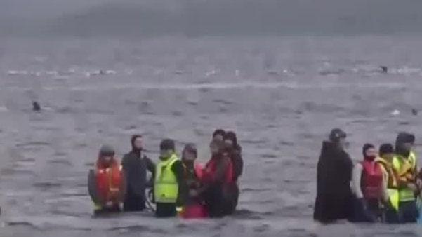 70 av de strandade valarna har räddats