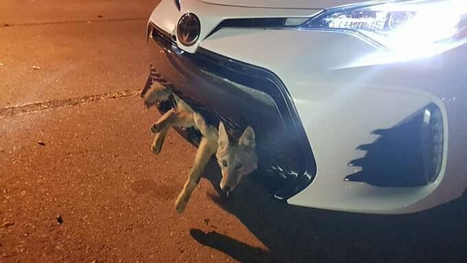 """Georgie Knox säger vidare att hon hon hade hållit """"motorvägshastighet"""" och inte hade märkt någonting. Foto: Faksimil från Facebook"""