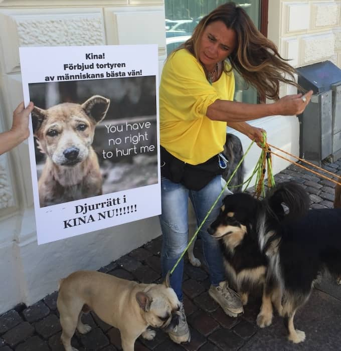 Carina Cederholm hade med sig sex av sina hundar under protestaktionen: Spike, Nahla, Kira, Milo, Ralph och Shiba. Foto: Björn Lindsten