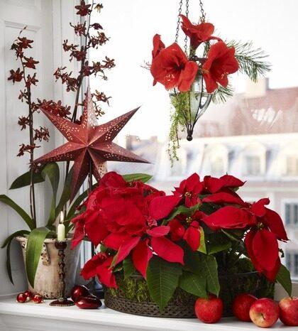 BILDSPECIAL Vackra blommor Leva& bo Expressen Leva& bo
