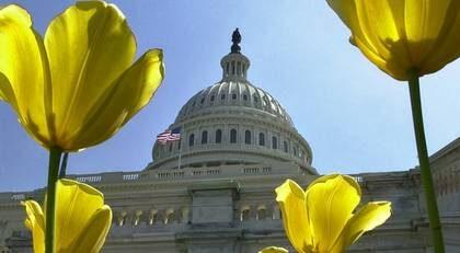 Regeringsbyggnaden Capitolium tornar upp sig bakom tulpanerna i vårsolen i Washington. Här sitter USA:s kongress.
