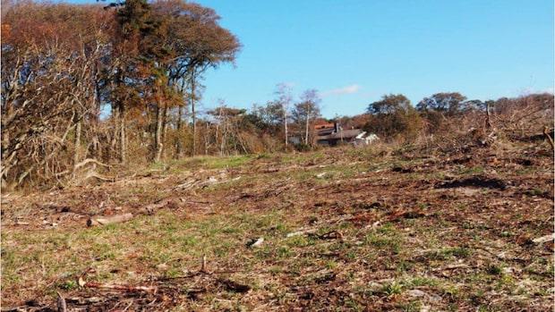 Bråket i lyxidyllen – fällde träd för havsutsikt
