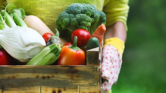 nyttigaste grönsakerna lista