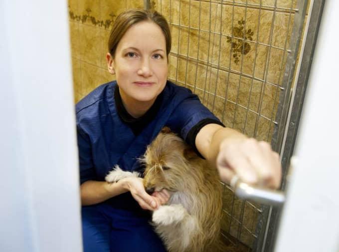 2. Stäng dörren. Om hunden är orolig eller rädd, tala lugnande till den. Stäng badrumsdörren och ha några godbitar till hands som du belönar hunden med då och då. Tanken är att du ska göra badet eller duschen till en så positiv upplevelse som möjligt. Foto: Theresia Köhlin