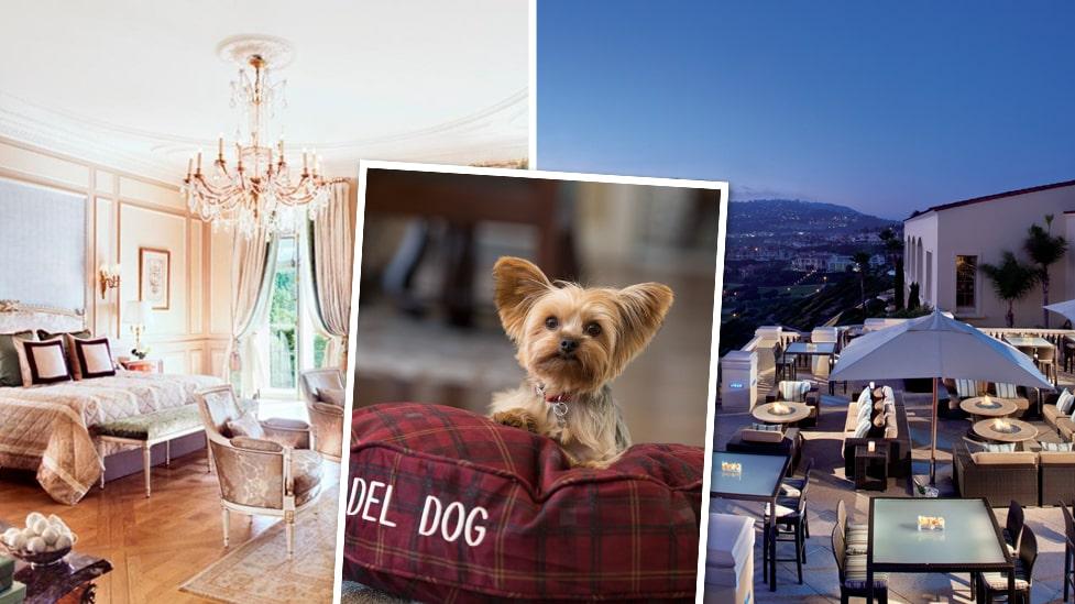 Hotell bergen med hund