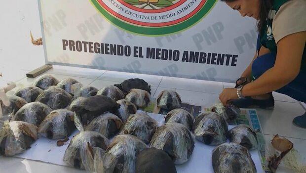 Smugglarna hade tejpat fast benen på de utrotningshotade sköldpaddsungarna