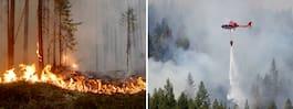 EM stoppas efter  skogsbränderna