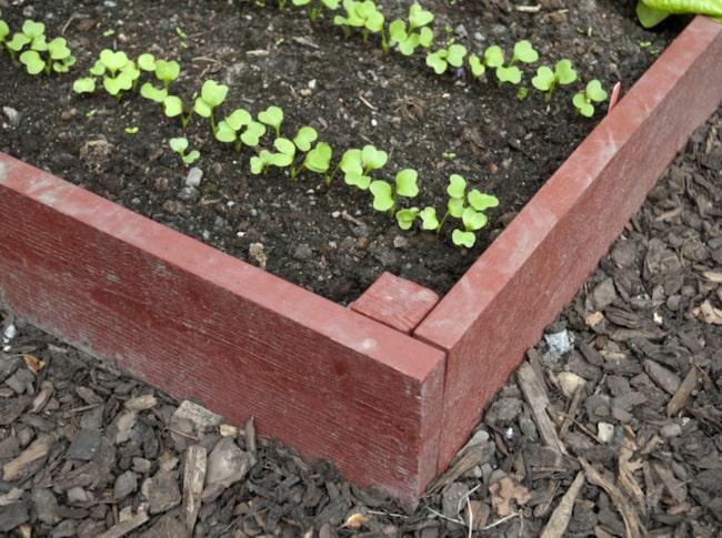Här får du tips på vad och hur du kan odla i pallkragar.
