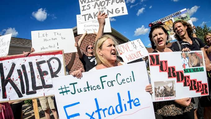 Stora protester hölls utanför Walter Palmers tandläkarklinik efter att han dödat Cecil. Foto: GLEN STUBBE / AP STAR TRIBUNE
