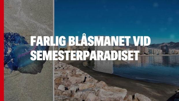 Livsfarlig blåsmanet upptäckt vid svenska semesterparadiset