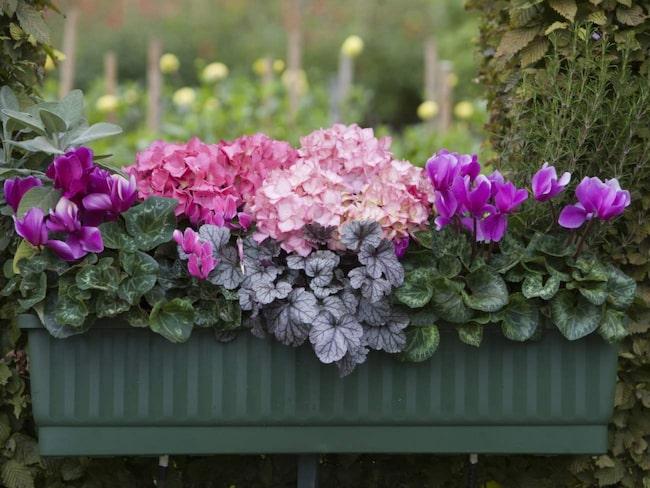 blommor som tål torka